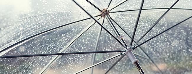 Clear Umbrella - Accent
