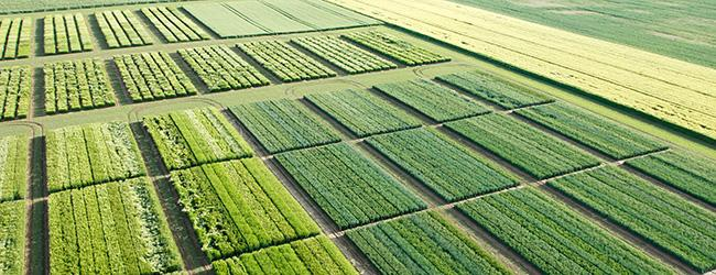 Accent Image_Field of Yields